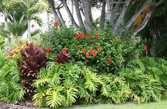 Keauhou Kona Surf & Racquet Club: Beautifully landscaped grounds