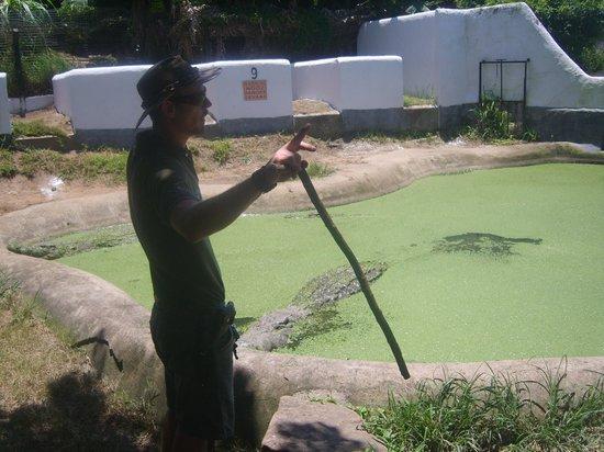 Crocodile Creek : biggest croc on property
