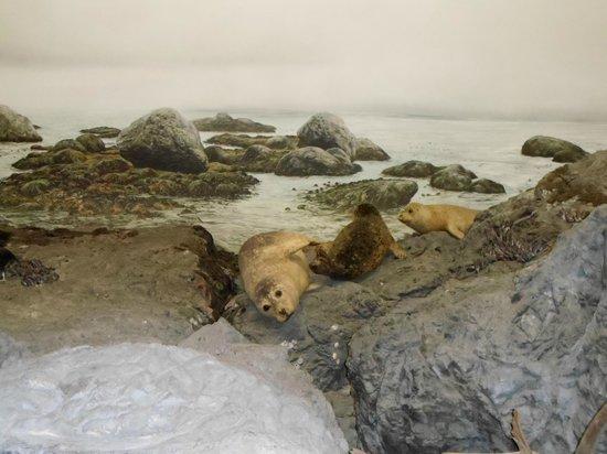 IMAX Victoria In the Royal BC Museum: Praia e focas