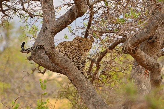 Campi ya Kanzi: Stunning wildlife viewing opportunities