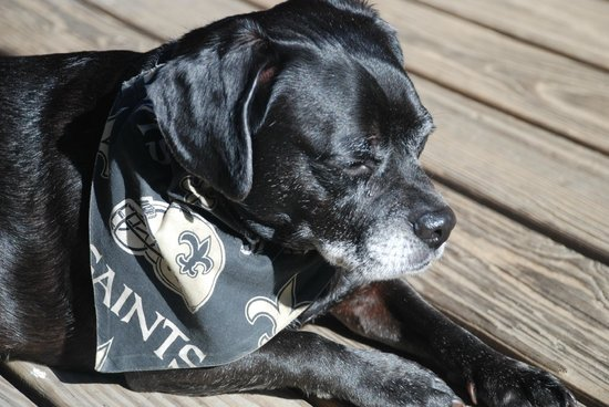 House of the Rising Sun Bed and Breakfast: Saints biggest fan