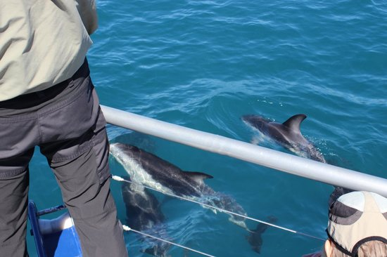 Dolphin Encounter: This is how close they get!