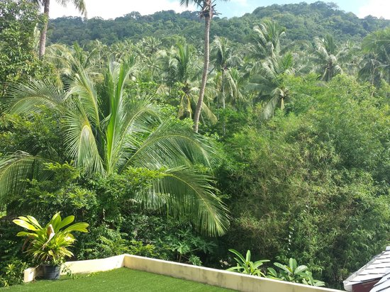 la Cigale: View Northeast into the Jungle