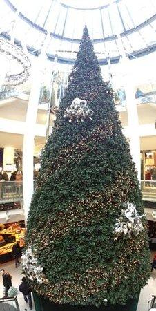 Vieille ville (Altstadt) : Large Christmas tree