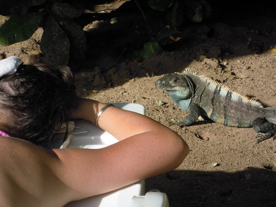 Hotel Las Tortugas: au bord de la piscine