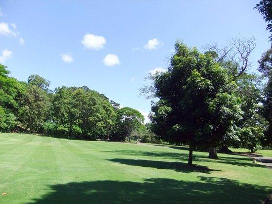 Royal Botanic Gardens: Greenery