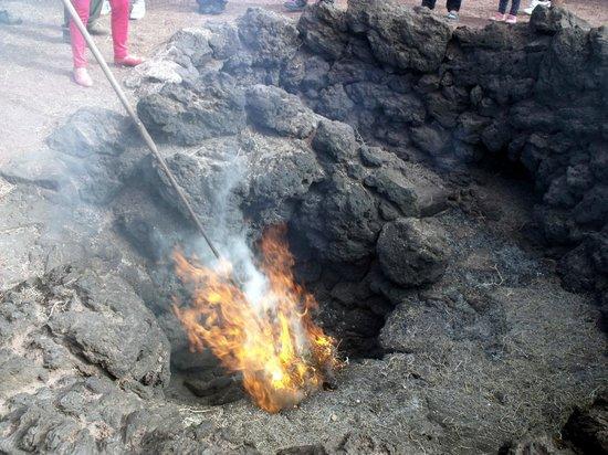Parque Nacional de Timanfaya: Le buisson enflamé spontanément