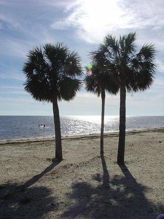 Perry, FL: Palms