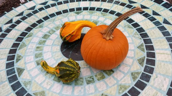 Sunfrost Farm: Outdoor dining in Fall
