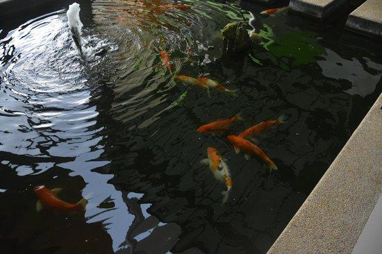 Phi Phi Andaman Beach Resort: Это рядом с лестницей в номера прудик с рыбками