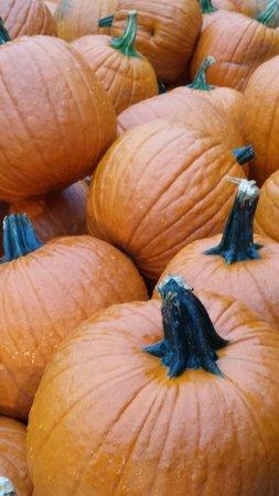 Sunfrost Farm: Pumpkins at Sunfrost