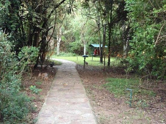 Sarova Mara Game Camp: Percorso per le camere