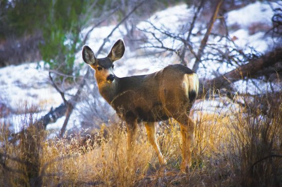 Bandelier National Monument : Saw a deer in the park!