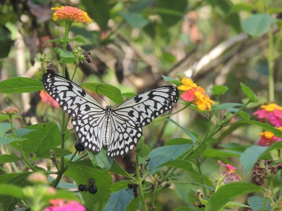 Puerto Princesa attractions - Shows a colourful butterfly