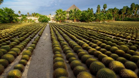Hacienda San Jose, A Luxury Collection Hotel, San Jose: Cactus farm