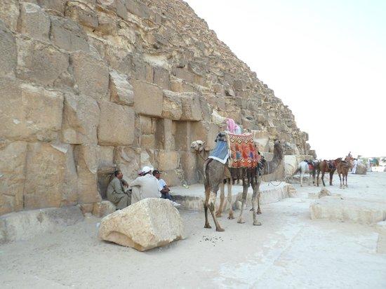 Piramida Giza: Верблюды и бедуины у пирамид