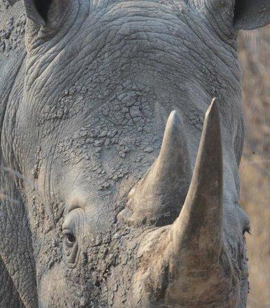 Tanda Tula Safari Camp: Close call with rhino