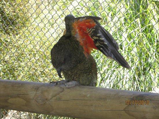 Paradise Valley Springs Wildlife Park: Up close wildlife