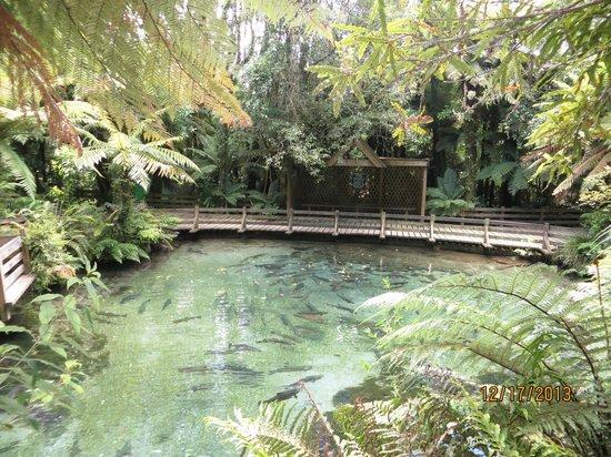 Paradise Valley Springs Wildlife Park: Beautiful