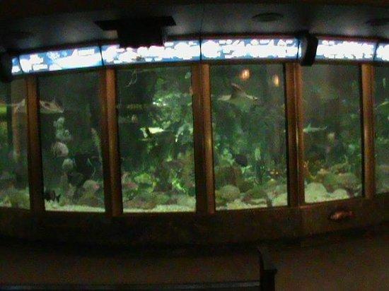 Shedd Aquarium: The GIANT Aquarium near the main Lobby