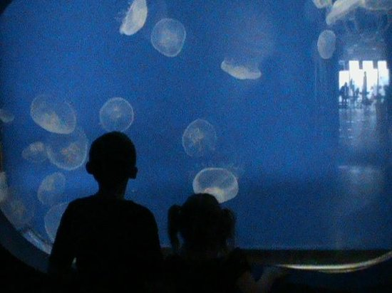 Shedd Aquarium: One part of the Jelly Fish Exhibit