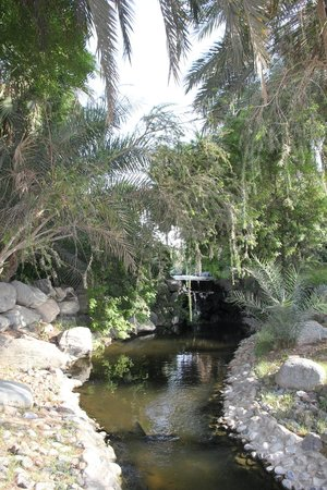 JA Jebel Ali Beach Hotel: Ландшафт