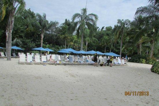 Discovery Cove: Praia 2