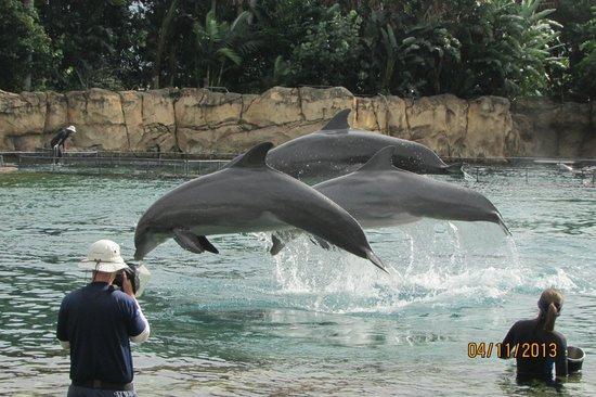 Discovery Cove: Golfinhos