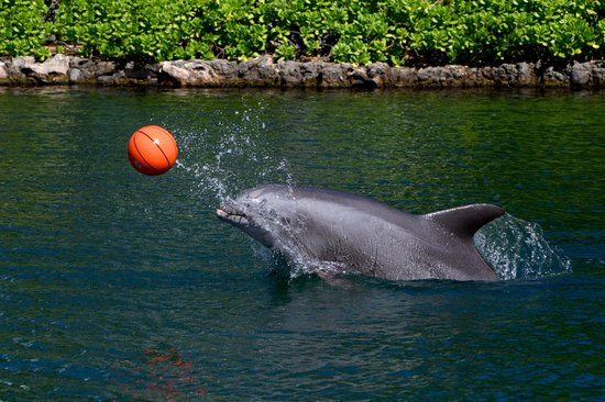 The Kahala Hotel & Resort : Dolphin at Play