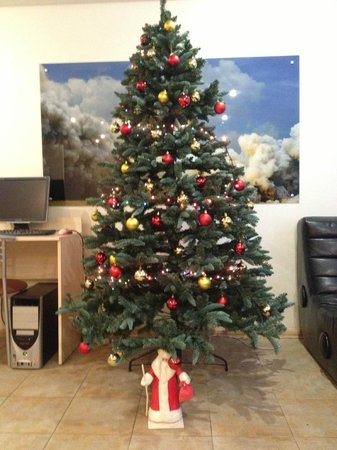 Gar'is Hostel: Our Christmas Tree