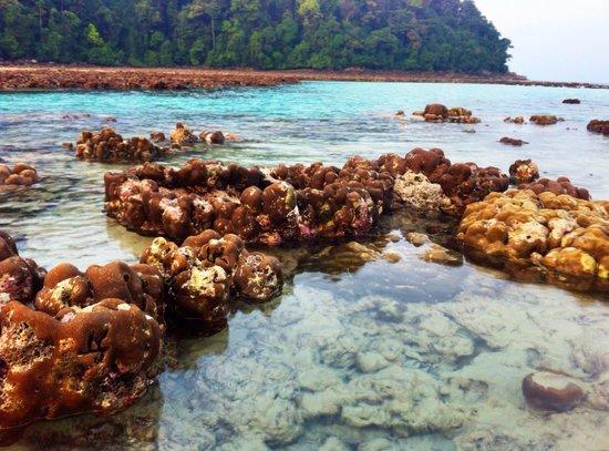 Mu Ko Surin National Park: rising of corals during low tide at Mai Ngam Beach - Surin Island