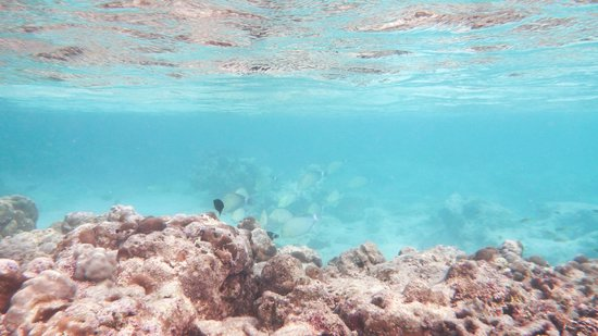 Mu Ko Surin National Park: Here where I found blacktip reef shark swimming away from me. too bad I couldn't snapshot it.