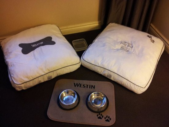 The Westin Harbour Castle, Toronto: Dog beds and bowls, delivered to the room!