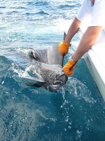 Crocodile Bay Resort: sailfish