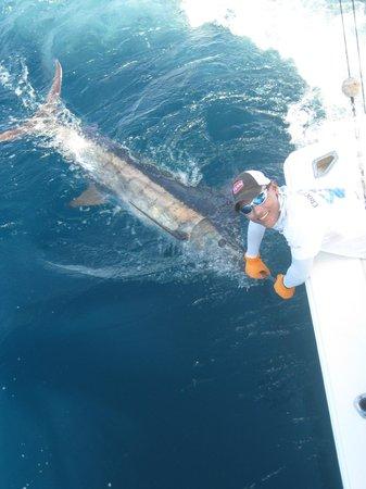 Crocodile Bay Resort: blue marlin