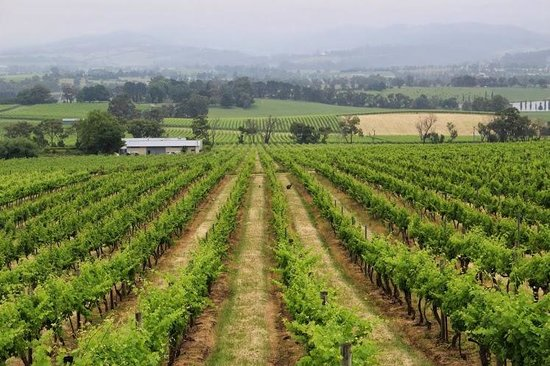 Vinetrekker Wine and Food Tours: One of the vineyards - the smallest one