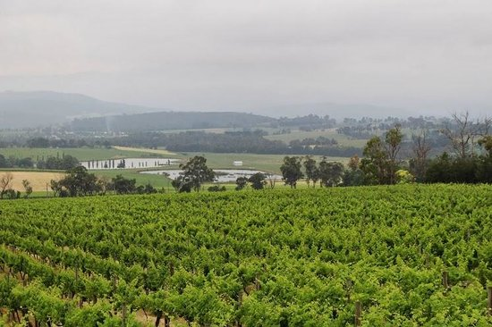 Vinetrekker Wine and Food Tours: Vineyard with wonderful scenery in the background