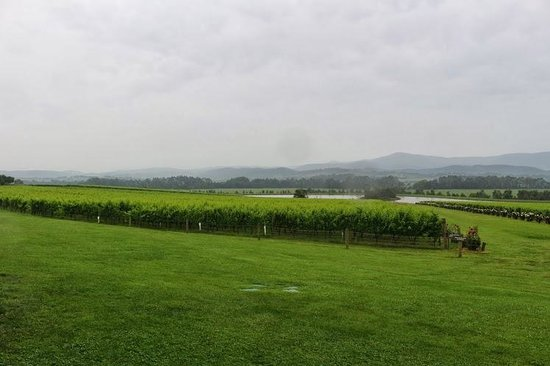 Vinetrekker Wine and Food Tours: One of the larger vineyards