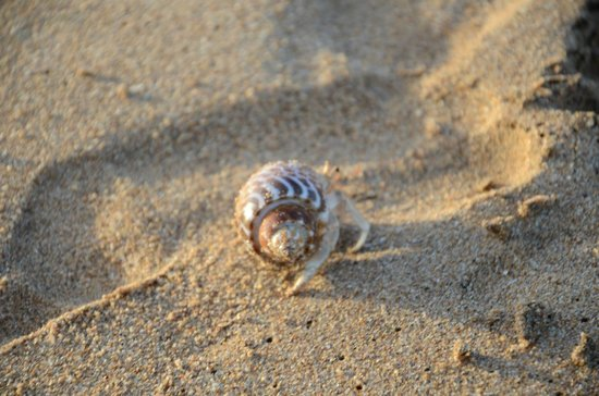 Back of Beyond - Kahandamodara: At the beach