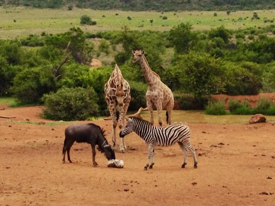 some wonderful animals picture of kwa maritane bush