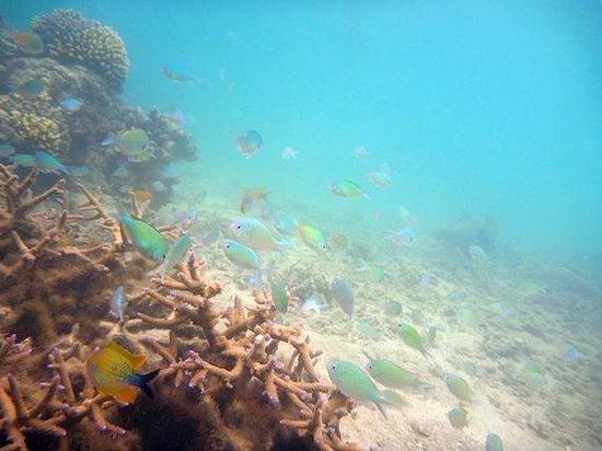Toberua Island Resort: snorkelling was amazing