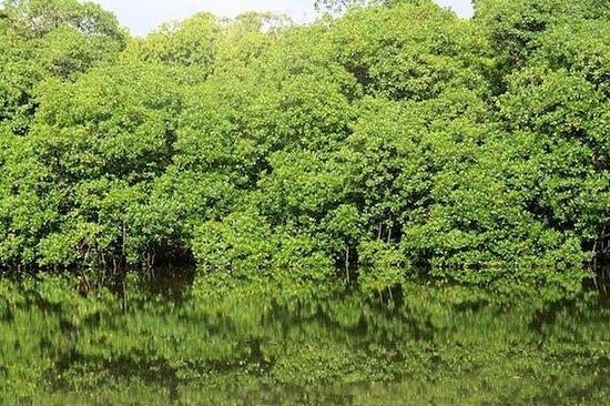 Toberua Island Resort: mangroves