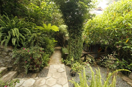 King Fern Cottage : Gardens