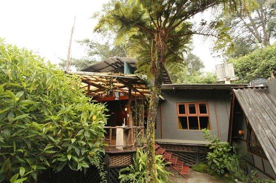 King Fern Cottage : Garden area