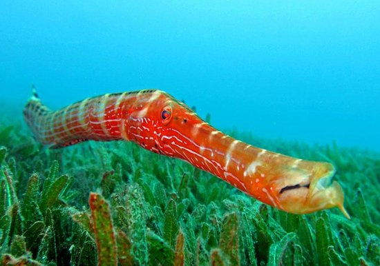 Dive Dominica: trumpet fish house reef