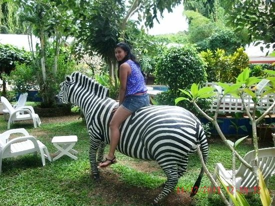Deep Forest Garden Hotel: If only were a real Zebra!!