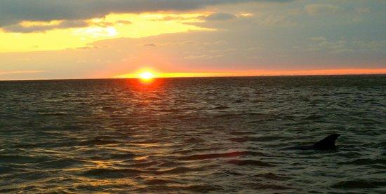 Everglades Area Tours: Sunset mit Delfinen
