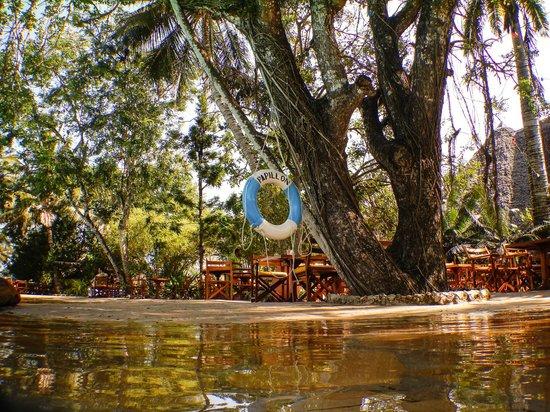 Papillon Lagoon Reef : vue de la piscine