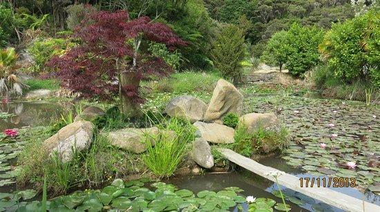 Bay of Islands Campervan Park: Pond on site