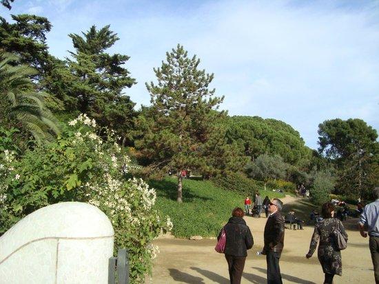 Parc Güell : Passeio no Parque guell